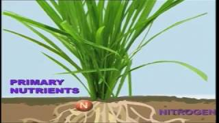 Integrated Nutrient Management in Rice and Potato