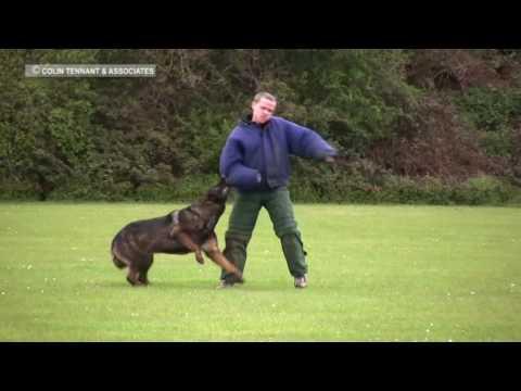 BEST POLICE DOG TRAINING - YouTube