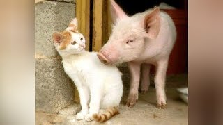Best of FARM ANIMAL videos - You