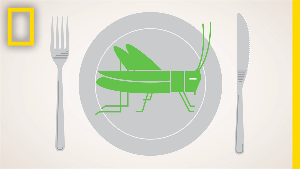 Should We Eat More Bugs? | National Geographic thumbnail
