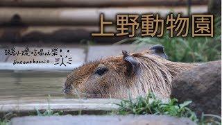 [日本旅行]東京上野動物園/水豚小璦找朋友