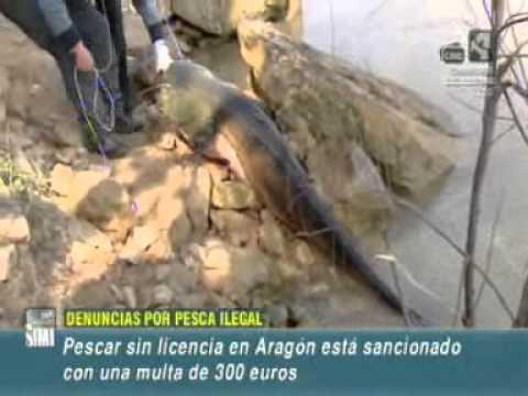 Pesca ilegal en el pantano de Mequinenza