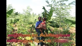 150 Day Multi Crop Plantation | part 3| Ullathanaya uyarvu