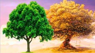 Смотреть онлайн Как поэтапно рисовать деревья красками