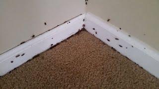 Roach Infestation - Walk Through For Painting Estimate of  Atlanta Rental Home