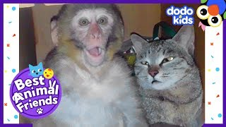 Billo The Cat Is Best Friends With A Monkey Named Avni | Dodo Kids: Best Animal Friends