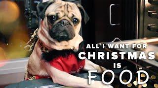 All I Want For Christmas Is Food - Doug The Pug