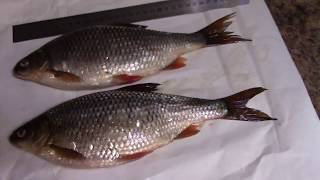 Маяк рыболовный клуб иркутск форум фарангов