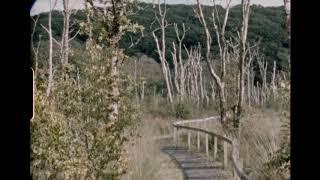 Bibio   Ribbons (Album Trailer Part 2)