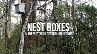 Nest boxes in the Victorian Central Highlands