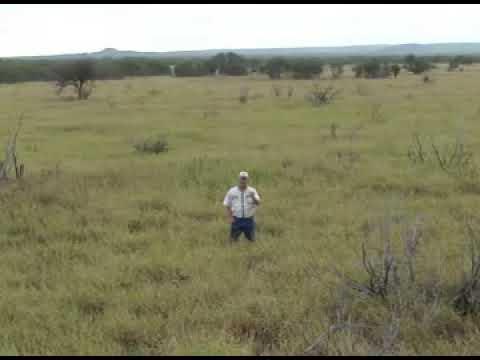 Grass Importance to Deer Management