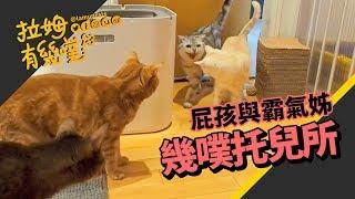 ►拉姆有幾噗◄ 貓咪來作客 令米古碎碎念的小奶油┃Cat's nursery ♧