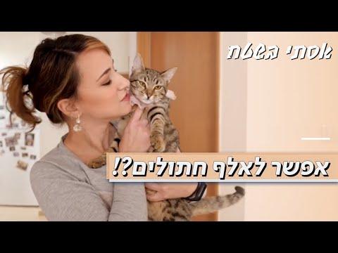 מומחית מסבירה: איך אפשר לשנות התנהגות של חתולים?