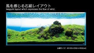 ADA Iwagumi - podmuch wiatru