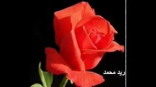 اسرار بابكر - لاقيتو باسم زهر المواسم