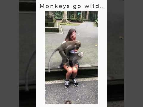 Monkeys go wild...