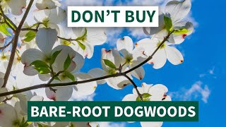 Don't Buy Bare-Root Dogwood Trees - Here's Why