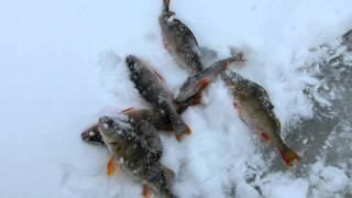 Набережные челны отчеты о рыбалке