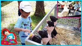 น้องบีม   ให้อาหาร หมู นก กระต่าย เที่ยวนครราชสีมา ปาลิโอเขาใหญ่