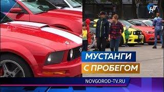 Участники международного автопробега на «Мустангах» припарковались на Софийской площади