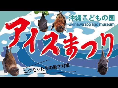 沖縄こどもの国アイスまつり【オリイオオコウモリ】