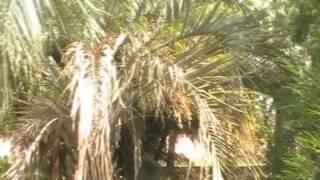 preview picture of video 'Jardin Botanico de Montevideo'