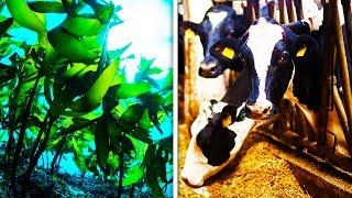 Seaweed Solves HUGE Climate Change Problem