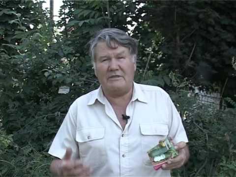 Валерий Панов: Можно ли сеять огурцы в июне?