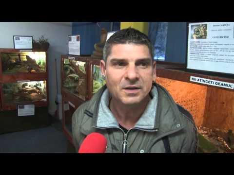 Diseară la știri VP TV: Expoziție de reptile vii, la Sinaia