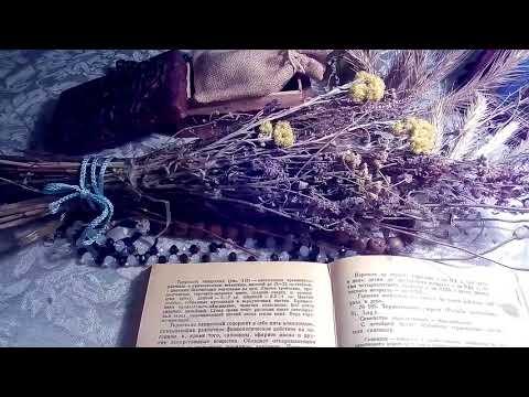 Термопсис ланцетный, описание и лекарственное применение по материалам книги Попова А.П.