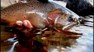 FLY FISHING YELLOWSTONE NATIONAL PARK-LINED with Chris Walklet