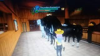 All of my Friesian Sport horses/Star Stable Online Friesian Sport horses