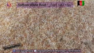 Saffron WhiteRoot