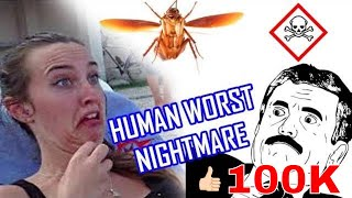 Scared of Cockroaches Funny