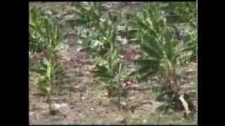 preview picture of video 'AEDRB San Antonio Water System June09'