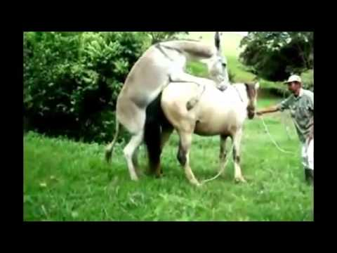 Animal Sex Most Funny Video