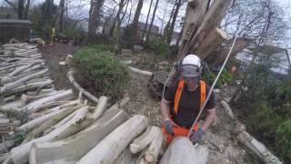 Eucalyptus dismantle in St Cleer