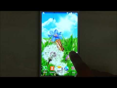 Video of Summer Flowers Wallpaper