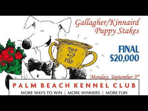 2018 Gallagher/Kinnaird Puppy Stakes