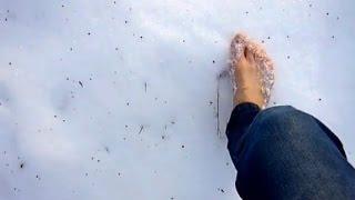Sněhová procházka (bez zvuku, s titulky)