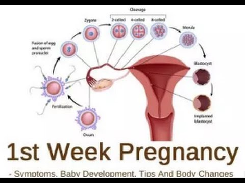Symptoms And Diet Plan For The 1st Week Pregnancy Of First Time Mothers