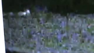 WTF EXCL YELLOWSTONE: GLOWING PEOPLE, WALK'N BALLS OF LIGHT? R U KID'N ME!