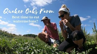 BEST TIME TO EAT WATERMELONS?  Let's find out at Quaker Oaks Farm