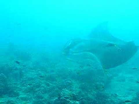 Manta-Flug, Malediven allgemein,Malediven