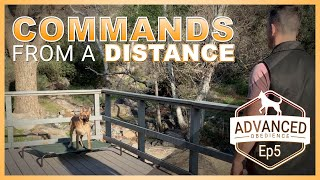 How to Teach Your Dog Commands from a distance.