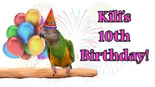 Kili Senegal Parrot - 10th Birthday!