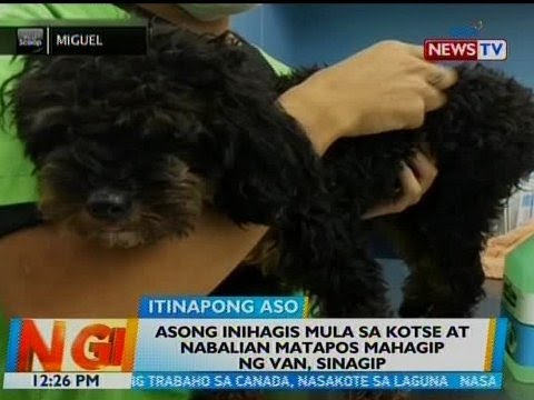 [GMA]  BT: Asong inihagis mula sa kotse at nabalian matapos mahagip ng van, sinagip
