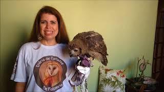 Aniversário do site e dia Mundial da Falcoaria