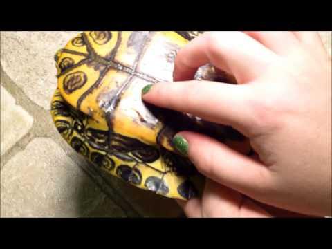 Pamamaraan nail treatment