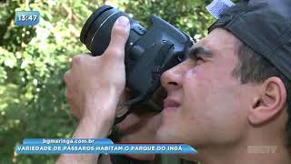 Variedades de pássaros habitam o Parque do Ingá